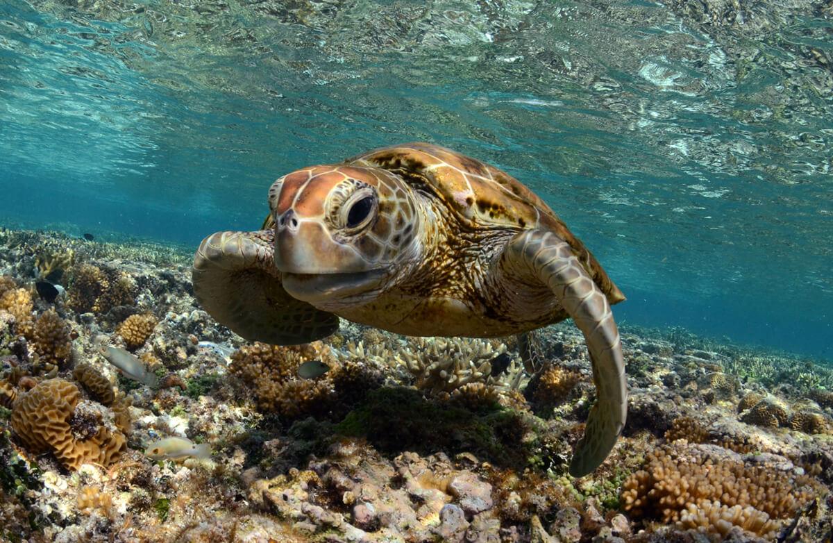 Meeresschildkroete Mikroplastik Verschmutzung der Meere